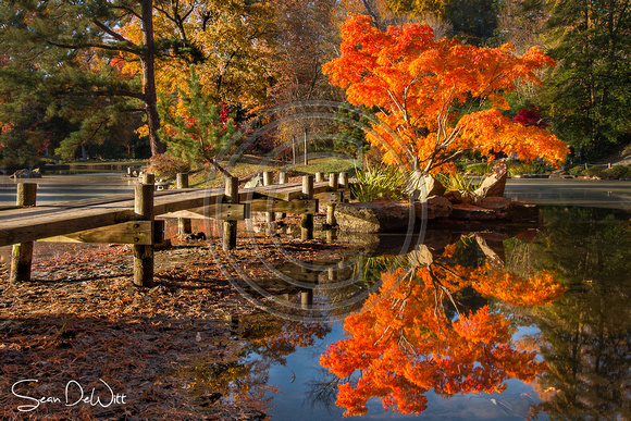 Maymont Fall Foliage 8x12